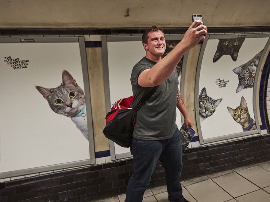 subway-cat-ads-metro-london-underground-11
