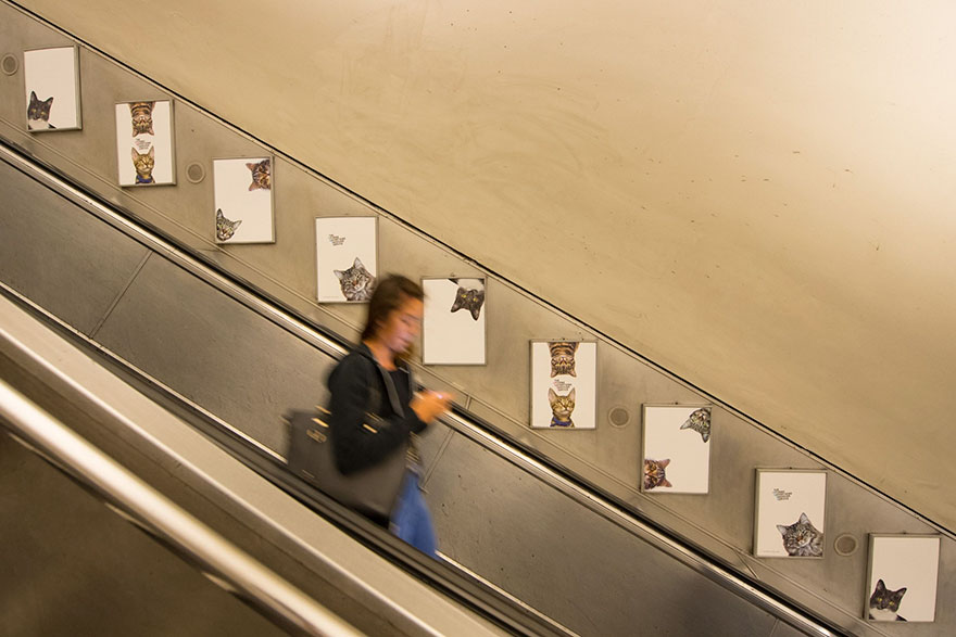 subway-cat-ads-metro-london-underground-12