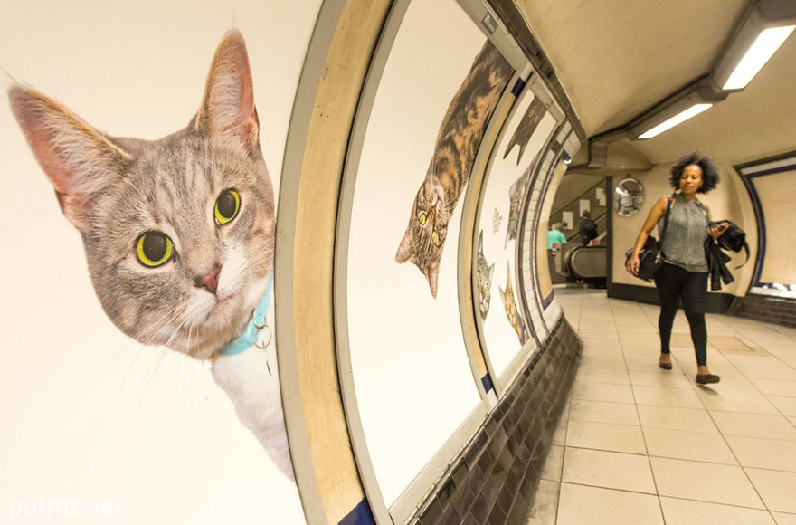 subway-cat-ads-metro-london-underground-9