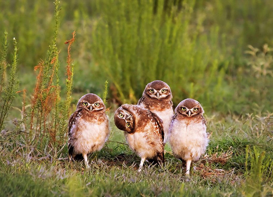 comedy-wildlife-photography-awards-best-photos-2016-15