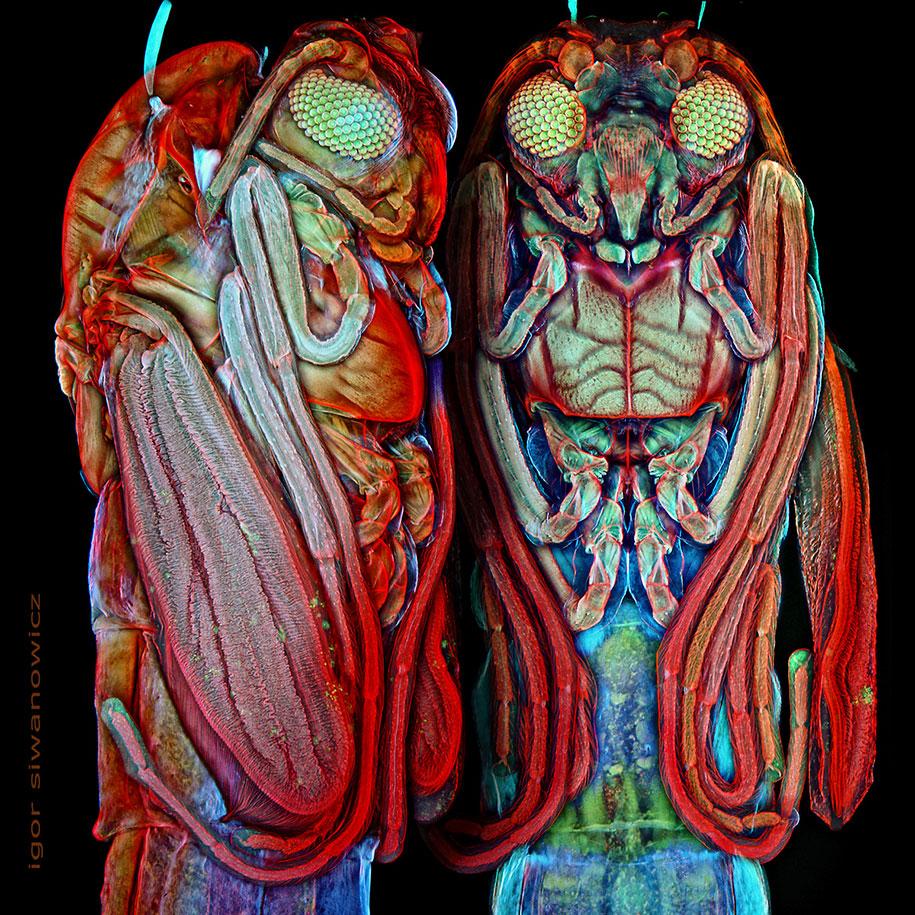 insect-microscope-photography-igor-siwanowicz-17