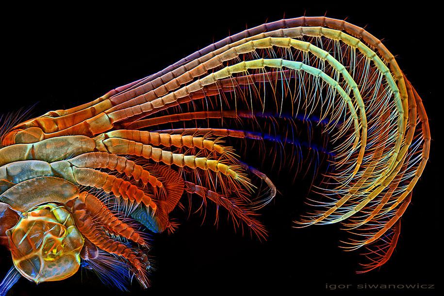 insect-microscope-photography-igor-siwanowicz-18