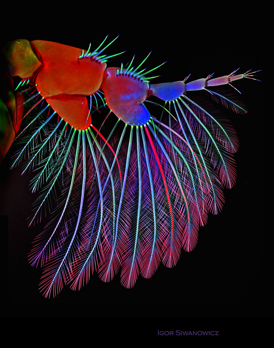 insect-microscope-photography-igor-siwanowicz-2
