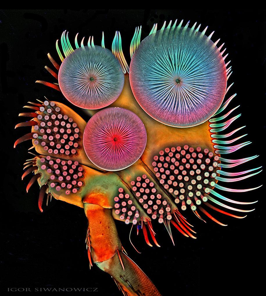 insect-microscope-photography-igor-siwanowicz-20