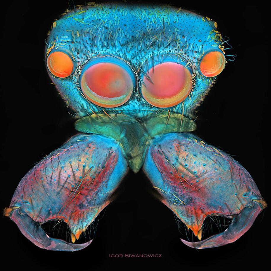 insect-microscope-photography-igor-siwanowicz-8
