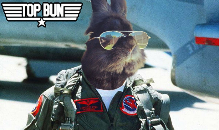 sunglasses-rabbit-photoshop-battle-5