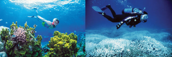 Bleaching of the Great Barrief Reef. See how it looked in 2002(image on the left) and in 2014 (image on the right)