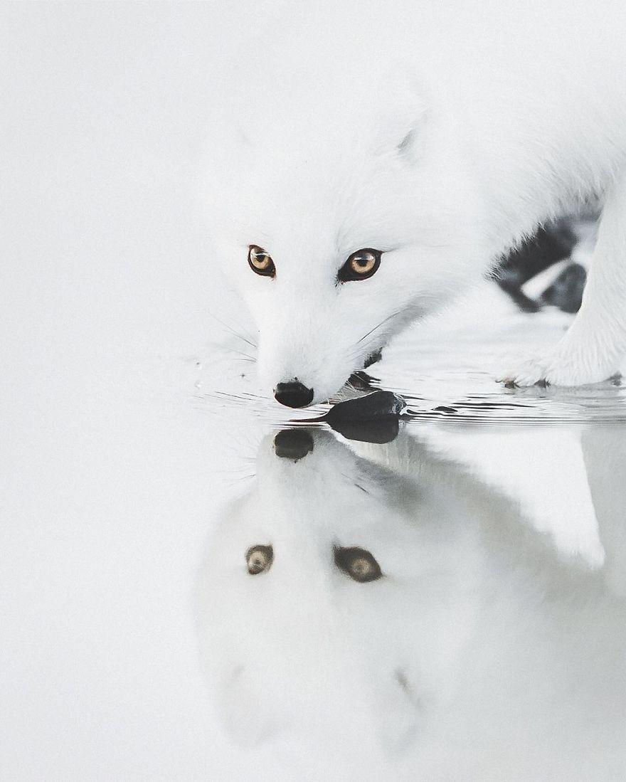 beautiful-iceland-nature-travel-photography-22