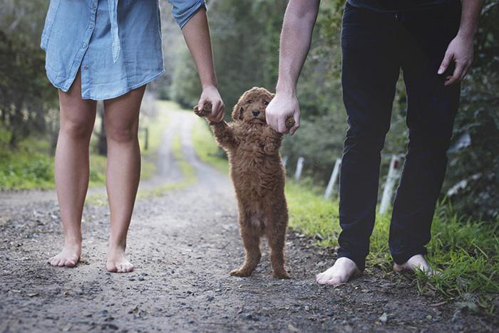couple-pregnancy-fake-baby-dog-marlboroprincess-6