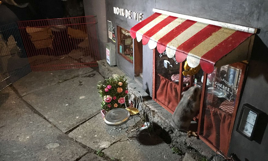 little-mouse-shop-sweden-anonymouse-12
