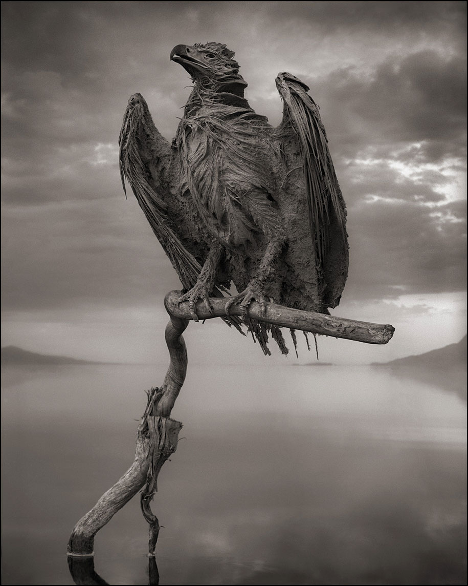 stone-animals-lake-natron-nick-brandt-2