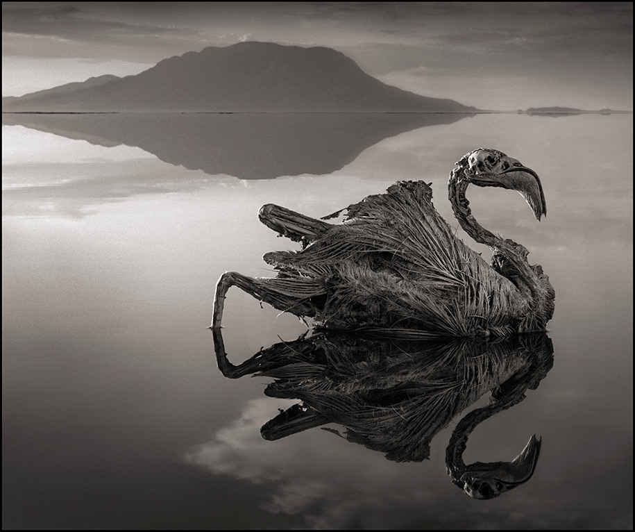 stone-animals-lake-natron-nick-brandt-3