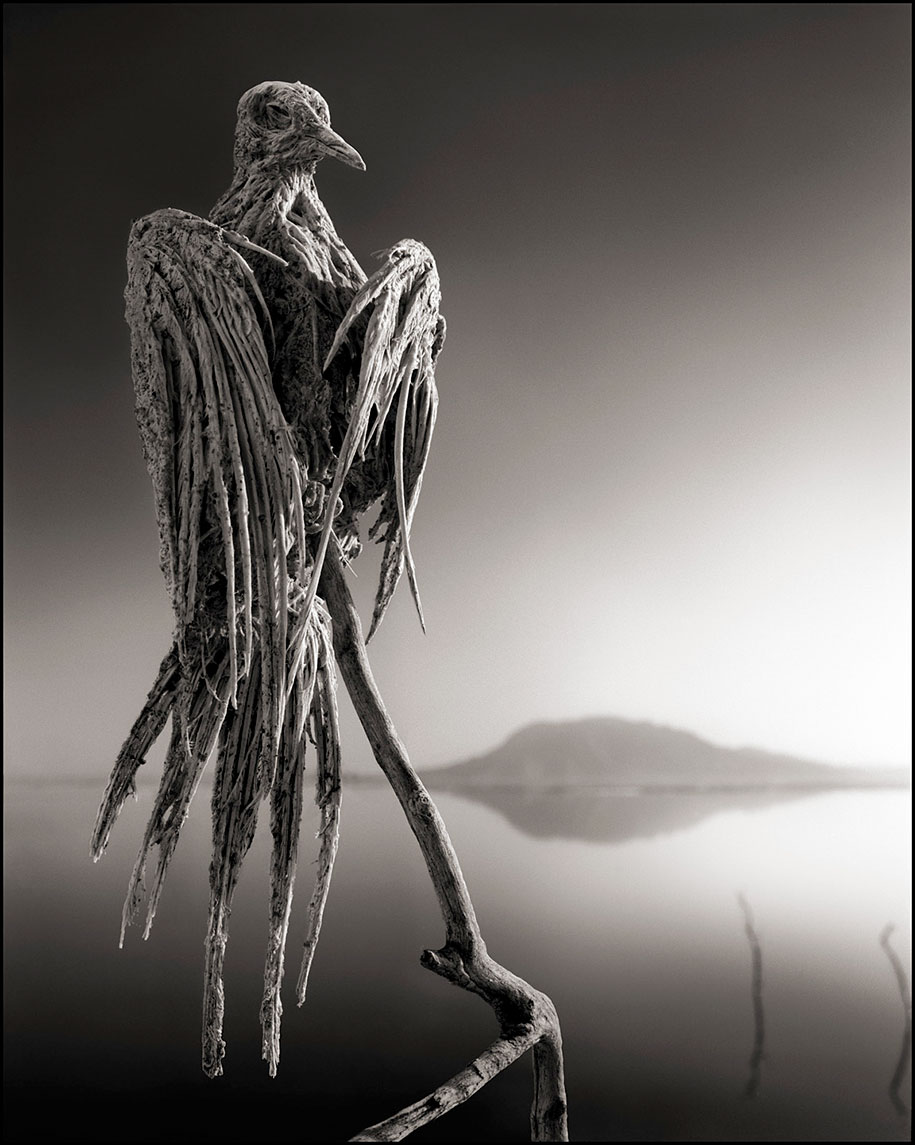 stone-animals-lake-natron-nick-brandt-5