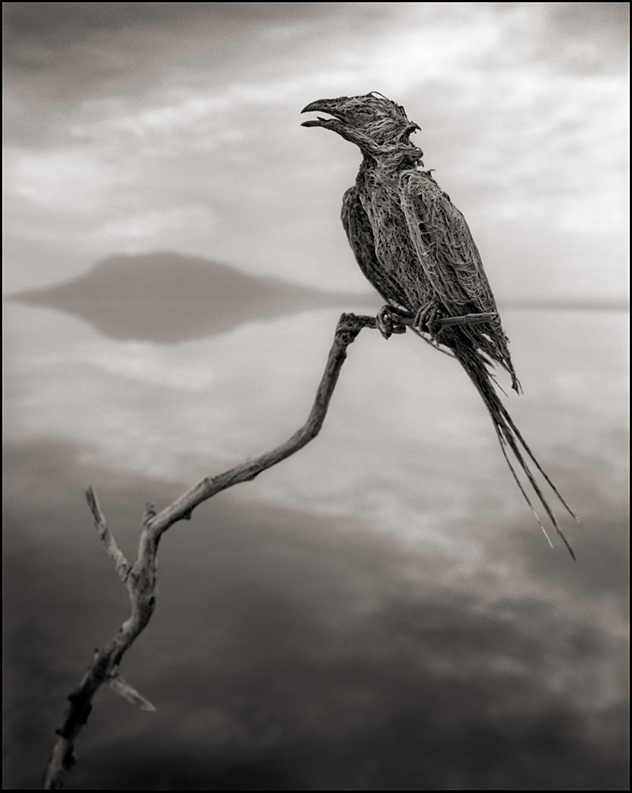 stone-animals-lake-natron-nick-brandt-6