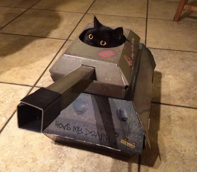 This Company Makes Hilarious Cardboard Tanks, Planes And Houses For Cats |  DeMilked