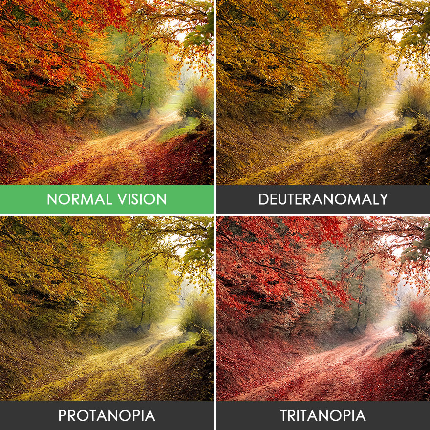 You Ll Be Surprised How People With Color Blindness See The