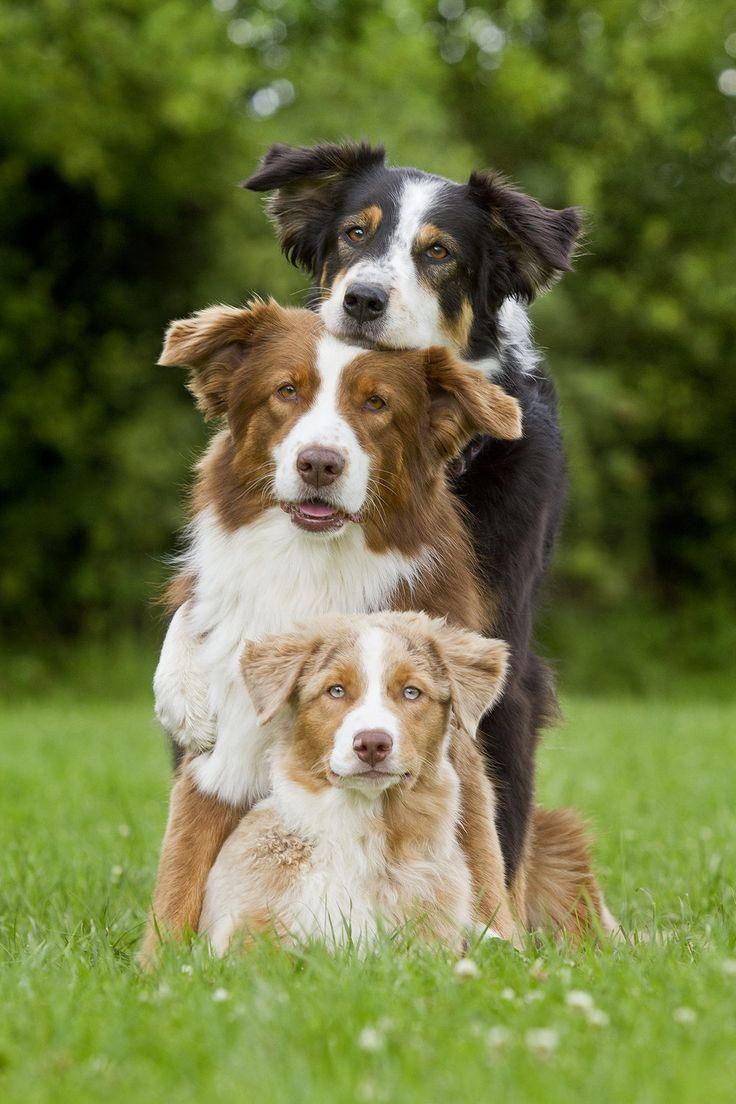 Free Puppies Dogs In Naivasha Kenya