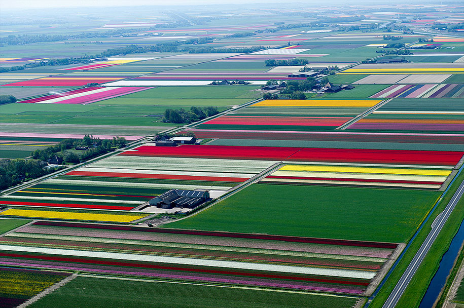 Aerial Photos Of Dutch Tulips In Bloom Look Like Earth In ...