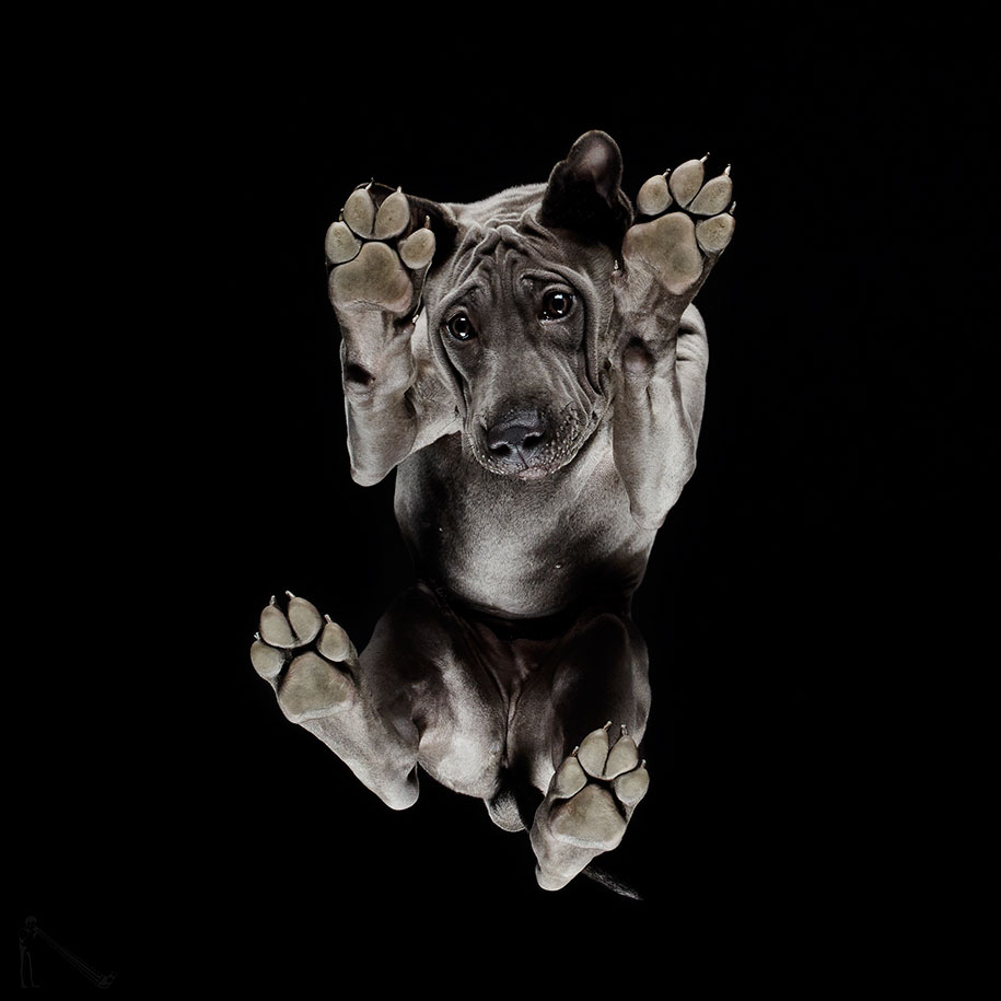 Under-Dogs: Artist Photographs Dogs From Below | DeMilked