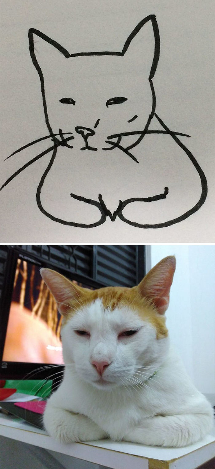 These Poorly Drawn Images Actually Look Like Real Cats And
