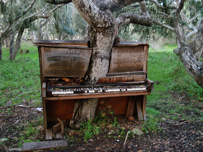 #24 The Old Piano Tree