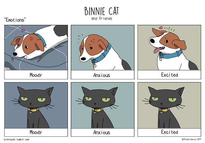 Difference Between Cats And Dogs Joke