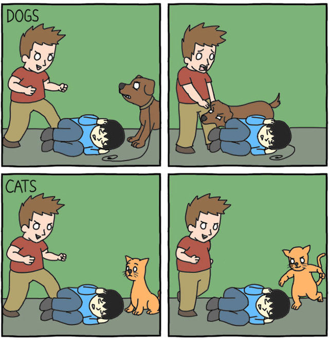 Picking Up A Cat Vs Dog Comic