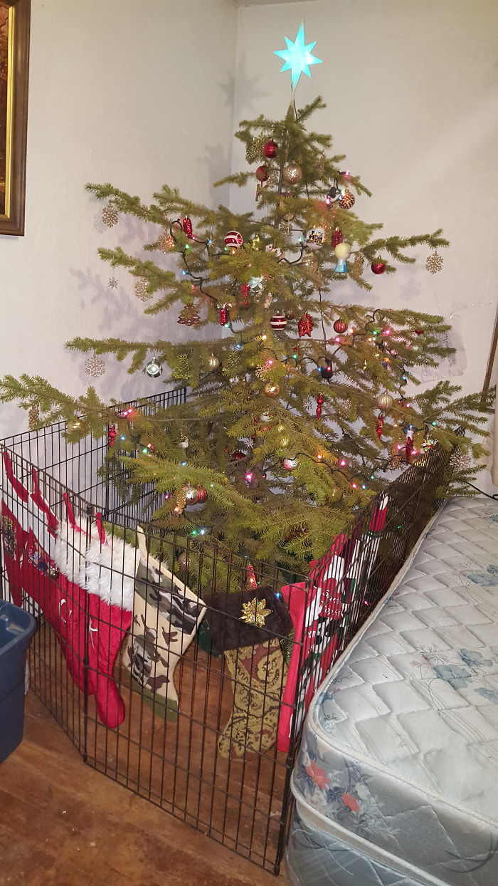 10+ People Who Found A Brilliant Way To Save Their Christmas Trees ...