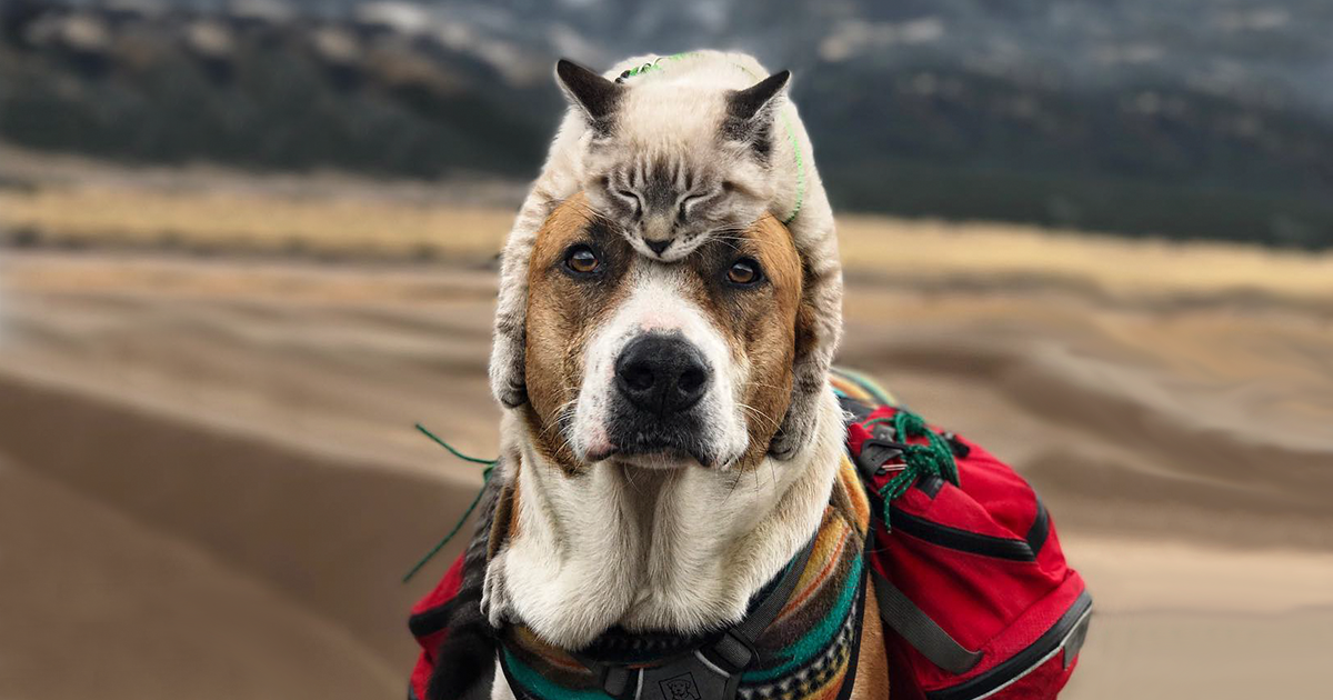 This Cat And Dog Enjoy Traveling Together, And Their ...