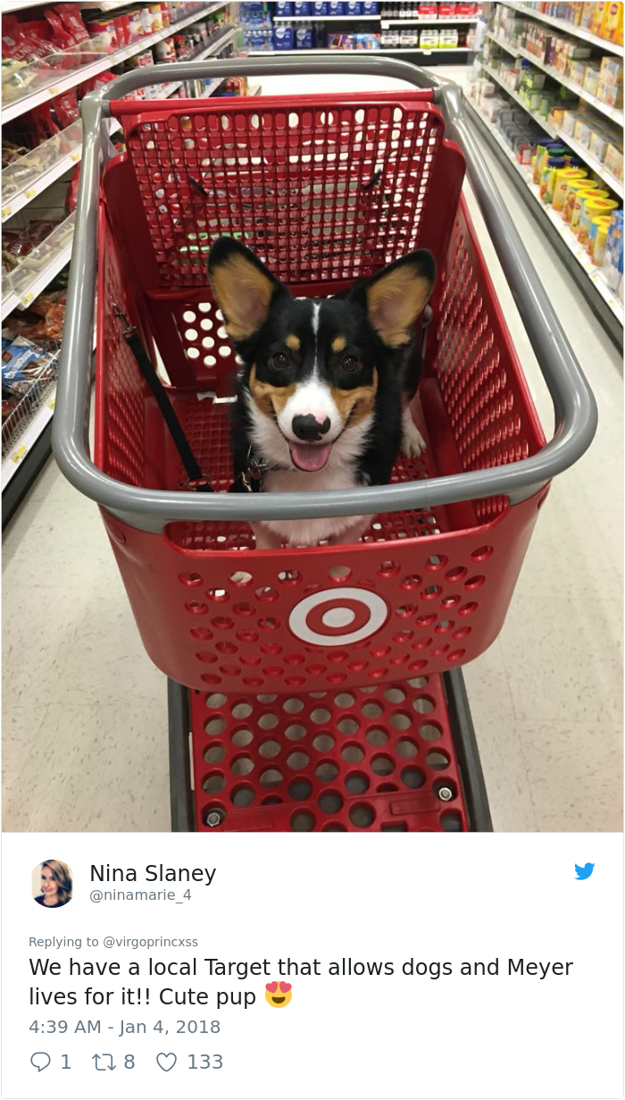 This Dog Went To Target And Had The Best Day Of Her Life