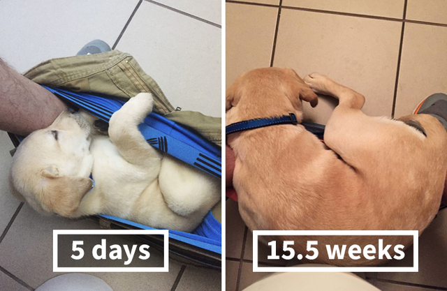 Everyone Is Laughing At This Hilarious Puppy Growth Chart