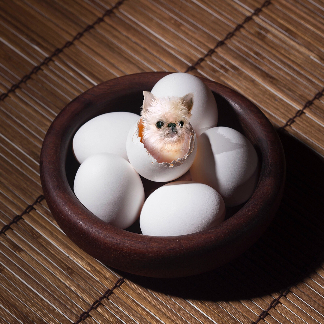 This Instagram Account Photoshops Puppies On Food And It S