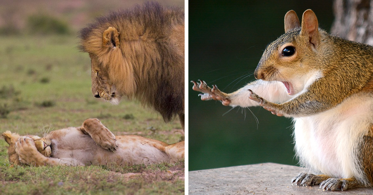 20+ Comedy Wildlife Photography Awards 2018 Finalists That