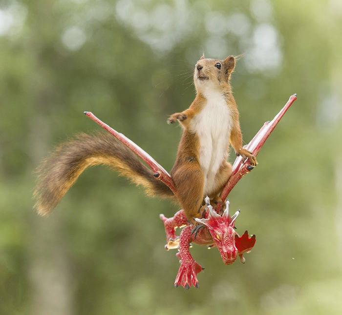 photographer follows squirrels daily for 6 years and here