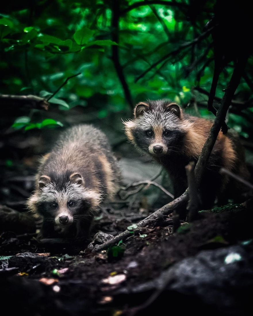 41 Magical Animal Photos That Prove Fairy Forests Are Real