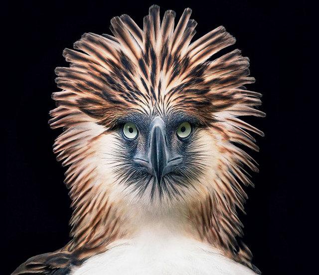 animal photographer tim flach
