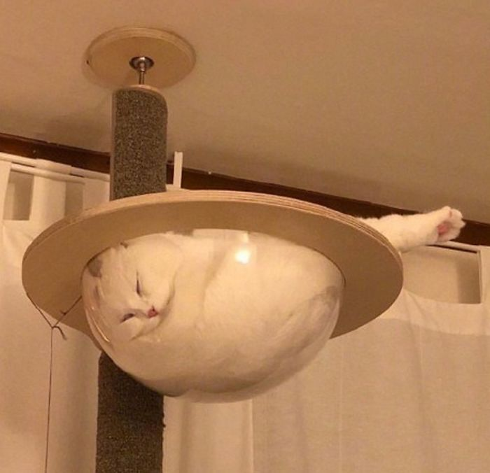 30 Adorable Cats Sleeping On Glass Tables Demilked