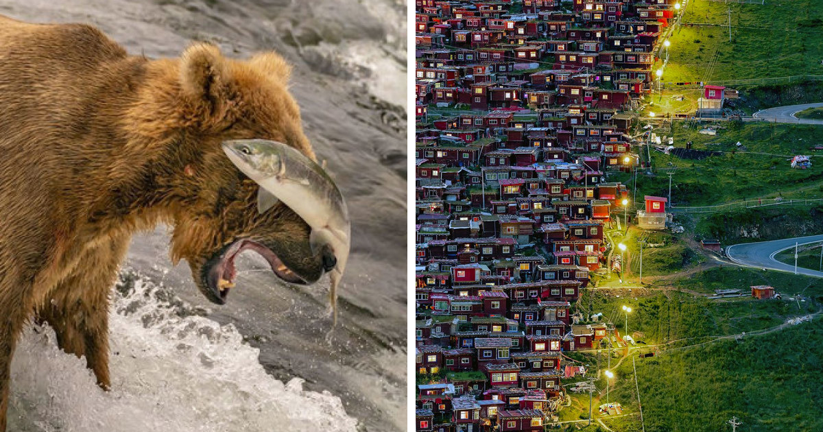 26 Breathtaking Winning Pictures Of This Year's National