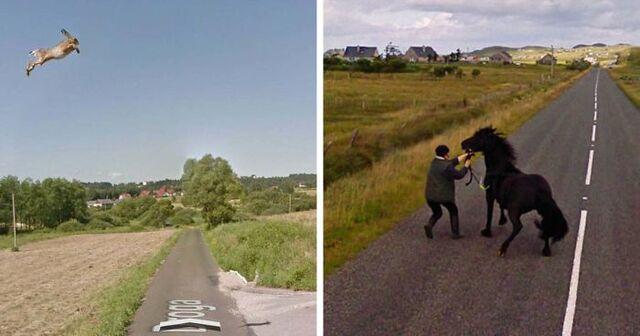 30 Animals Accidentally Captured On Google Street View