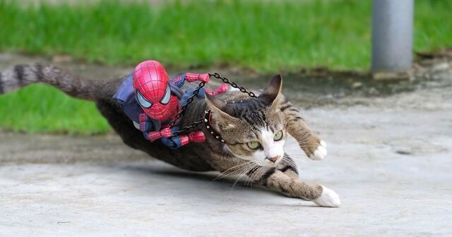 This Thai Artist Makes Cats Pose With Baby Spider Man To Create Hilarious Scenarios 30 Pics Demilked