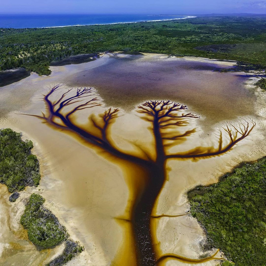 "Photographer Derry Moroney Captures 8 Breathtaking ""Tree Of Life"" Photos Of A Receding Lake"
