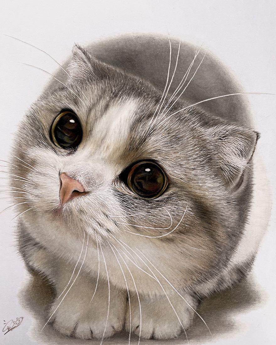 This Japanese Artist Creates Photorealistic Drawings Of Cats, And It's Almost Impossible To Tell Them Apart From The Real Thing