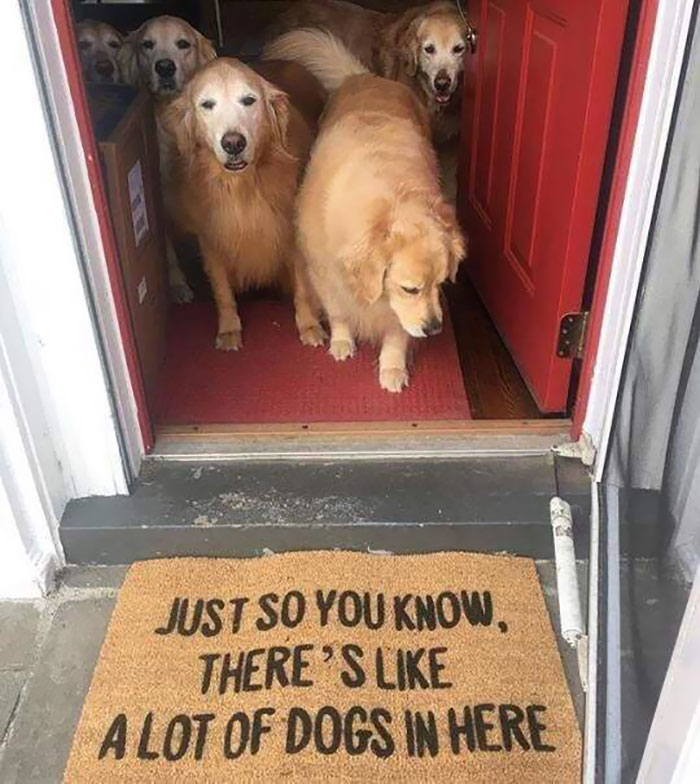 30 Times People Spotted Creative Doormats And Just Had To Share Them Online (New Pics)
