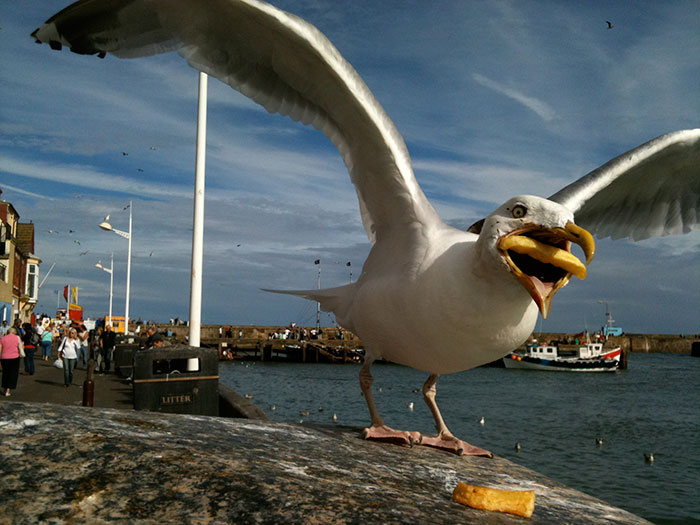 Google Fell In Love With This Woman's Vacation Photo Of A Seagull Eating A Chip, Bought It And Used It In Their Summer Campaign