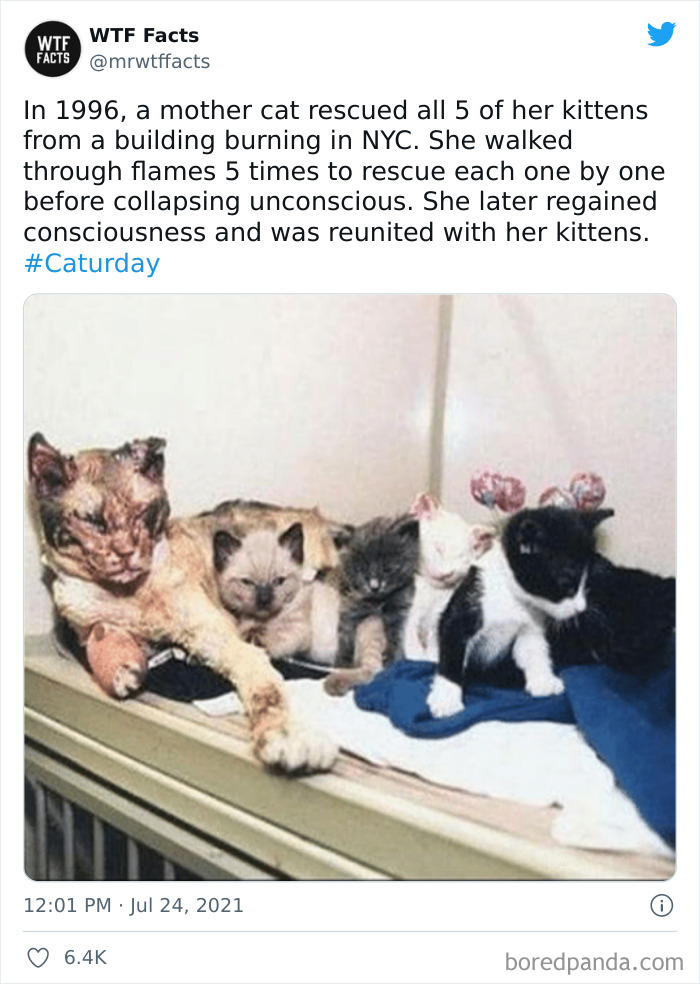 30 Real Yet Hard To Believe Facts Shared By This Twitter Account (New Pics)